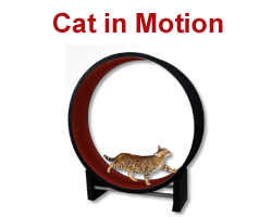 Cat in Motion